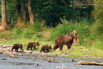 Фотоохота: Медведи-рыбаки (10 дней + авиа)
