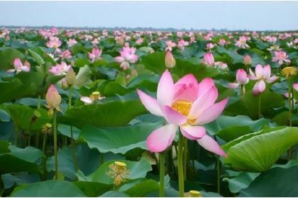 Золотое дно и цветок Будды (Астрахань с поездкой на катерах к лотосовым полям, озеро Эльтон - 4 дня + ж/д)