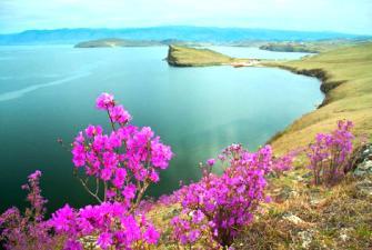 Цветение багульника на Байкале (5 дней+авиа)