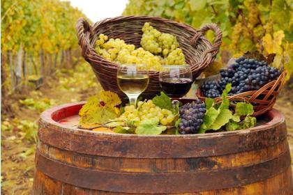Гроздь виноградная, крест из лозы (от 3 до 9 дней)