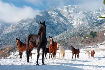 Алтай. Зимняя сказка  (5 дней+авиа)